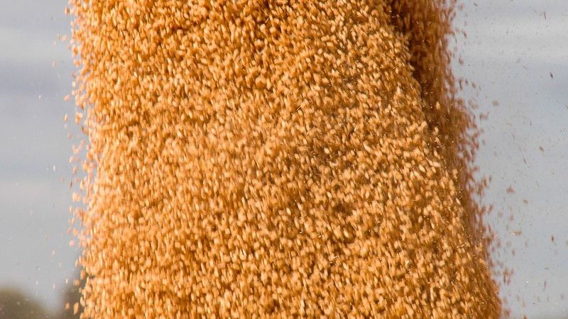 Janlin Grain Auger Harvest Farm