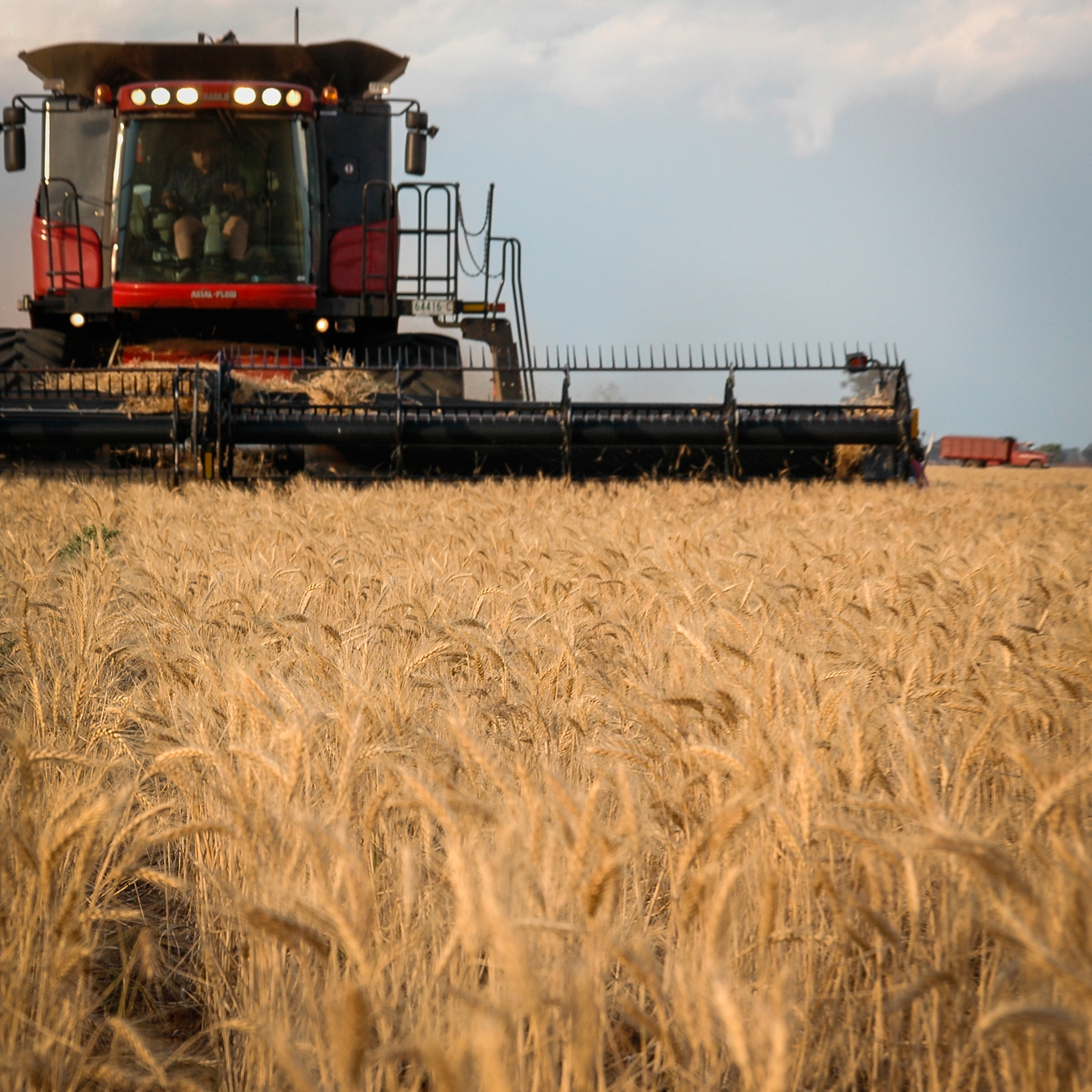 Janlin Harvest Farm Header Wheat Crop Case Reaping
